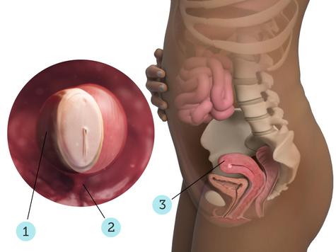 تصویر بارداری شما: هفته ی ۴ : کودک شما در ۴ هفتگی چه شکلی است؟