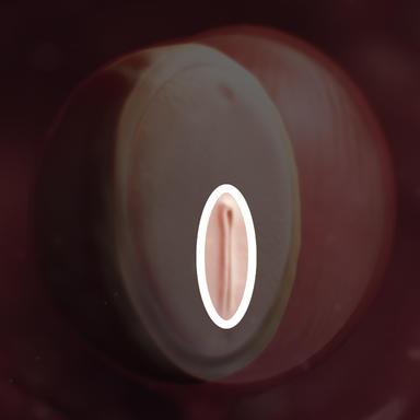 ریشه ابتدایی، جایی است که سلولها به داخل جنین مهاجرت می کنند تا جنین را تشکیل دهند