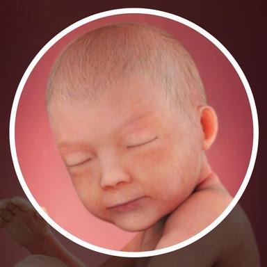 کودک شما سر خود را به سمت یک نور مداوم و روشن از بیرون بر می گرداند.