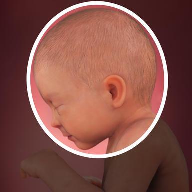 استخوان جمجمه می تواند به اندازه کافی فشرده شود تا در طول زایمان متناسب کانال تولد شود.